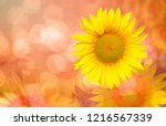 sunflower background   abstract ... | Shutterstock . vector #1216567339
