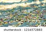 harvested fresh olives on net | Shutterstock . vector #1216572883