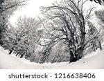 winter in schwarzwald. winter...   Shutterstock . vector #1216638406