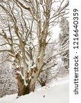 winter in schwarzwald. winter...   Shutterstock . vector #1216640359