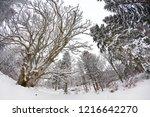 winter in schwarzwald. winter...   Shutterstock . vector #1216642270