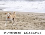 Stock photo a dogs playground and pet portraits dogs at the beach playing in the ocean and on the sand regal 1216682416