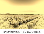 agriculture on land reclaimed... | Shutterstock . vector #1216704016
