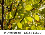 branch fork with leaves in...   Shutterstock . vector #1216711630