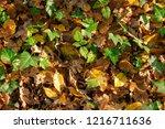autumn forest floor in the...   Shutterstock . vector #1216711636