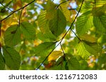 leaves from below in the...   Shutterstock . vector #1216712083