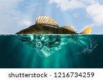 steampunk style fish. perch.... | Shutterstock . vector #1216734259