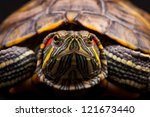 One Pond Slider Isolated On Th...