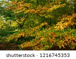 tree with leaves in autumn...   Shutterstock . vector #1216745353