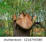 curios in the forest. location  ...   Shutterstock . vector #1216745380