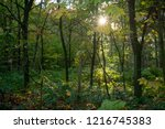 forest in autumn at morning...   Shutterstock . vector #1216745383