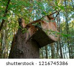 curious  felled tree. location  ...   Shutterstock . vector #1216745386