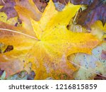 colorful beautiful autumn... | Shutterstock . vector #1216815859