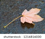 fallen from a tree leaf on the... | Shutterstock . vector #1216816030