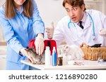 doctor and assistant in vet...   Shutterstock . vector #1216890280