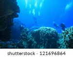 marine life in the red sea | Shutterstock . vector #121696864
