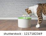 thirsty tabby cat drinking... | Shutterstock . vector #1217182369