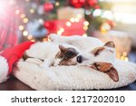 Stock photo cat and dog sleeping under christmas tree pets friends happy new year 1217202010