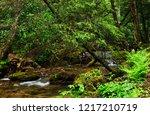 rushing mountain stream ...   Shutterstock . vector #1217210719