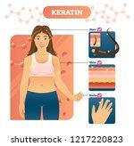 keratin vector illustration.... | Shutterstock .eps vector #1217220823