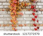leaves of ivy covering the wall.... | Shutterstock . vector #1217272570