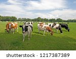 cows in a green meadow | Shutterstock . vector #1217387389