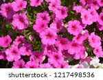 close up of a flower border... | Shutterstock . vector #1217498536