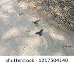 photo butterfly animal wildlife   Shutterstock . vector #1217504140