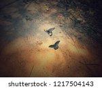 photo butterfly animal wildlife   Shutterstock . vector #1217504143