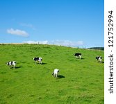 Holstein Bulls At A Pasture In...