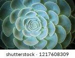 sucucculent plant close up | Shutterstock . vector #1217608309