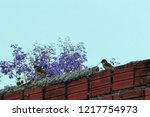 red brick wall with birds... | Shutterstock . vector #1217754973