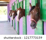 Stock photo horse shelter barn where horses are raised and maintained 1217773159
