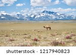 bactrian camels in mongolia | Shutterstock . vector #1217940823