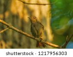 photos from wildpark   located ... | Shutterstock . vector #1217956303
