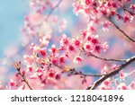 soft focus cherry blossom or... | Shutterstock . vector #1218041896