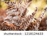 frozen autumn fern leaves in... | Shutterstock . vector #1218124633