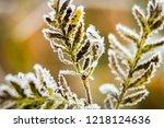 frozen autumn fern leaves in... | Shutterstock . vector #1218124636