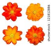 Stock photo orange cosmos flower isolated on white 121812886