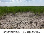 Dry Field With Windmills