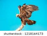 falcon. golden eagle close up... | Shutterstock . vector #1218164173