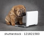 Stock photo sharpei puppy dog watching dvd player with attention 121821583