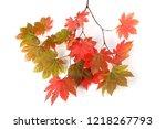 autumn maple leaves | Shutterstock . vector #1218267793
