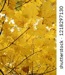 yellow maple leaves autumnal... | Shutterstock . vector #1218297130