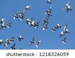 flock of speed racing pigeon... | Shutterstock . vector #1218326059