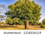 beautiful chestnut tree loaded... | Shutterstock . vector #1218326119