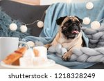 cute pug dog with blankets on...   Shutterstock . vector #1218328249