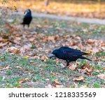 Black Raven In A City Park...