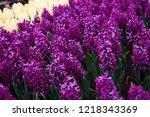 spring flowers.background...   Shutterstock . vector #1218343369