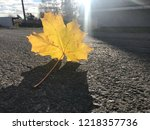 fall color change | Shutterstock . vector #1218357736